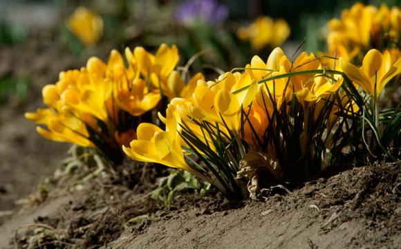 Huerto primavera